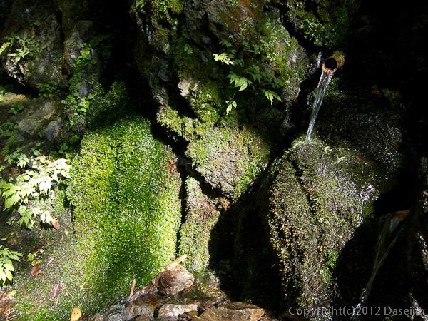 121020川苔山・岩から清水がしみだす