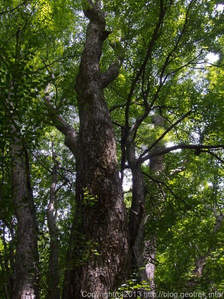 20130813広河原の樹林