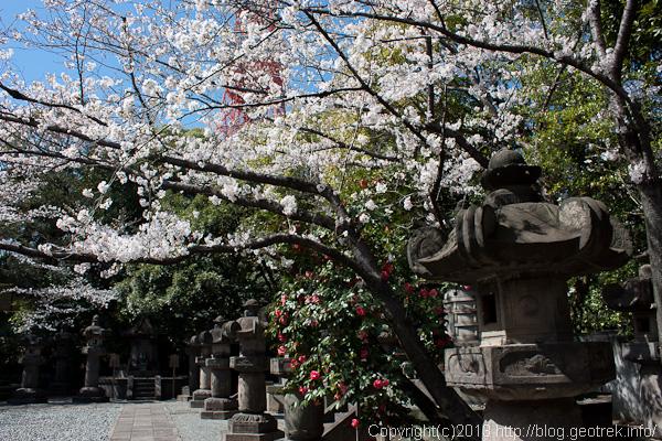 shibakoen_130321-8