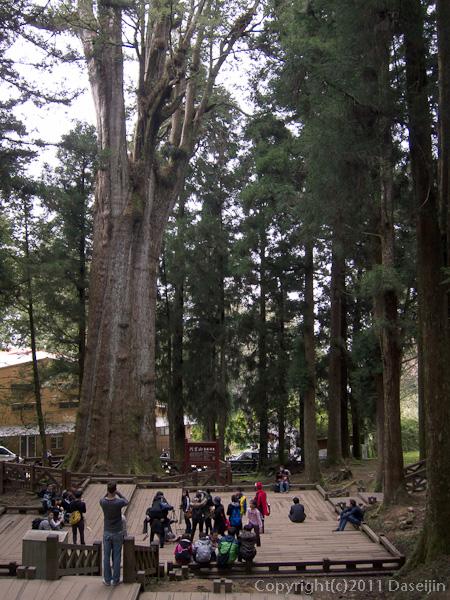 120310阿里山・巨木群の中の広場