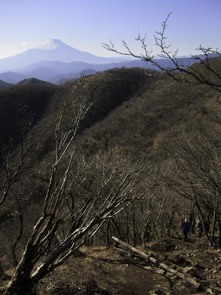 111204丹沢・鍋割山への尾根道
