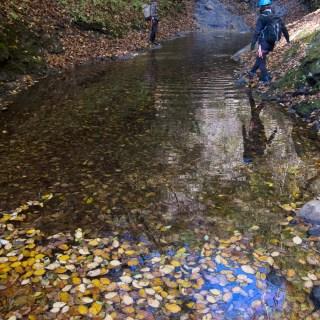 谷急沢~落ち葉で彩られる水面