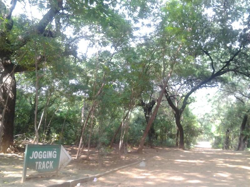 """Jahapanah_city_forest"""