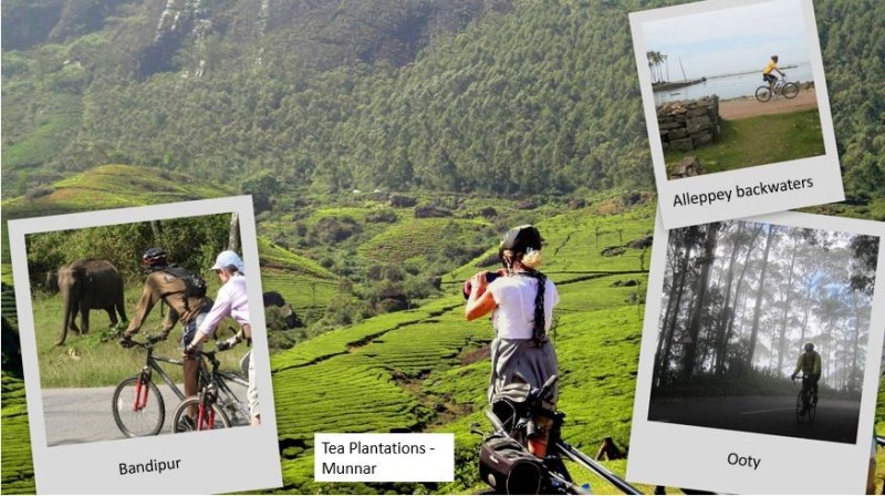 Cycling_Tours_Tea Plantation