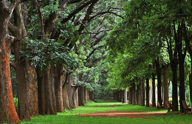 Beautiful Running Tracks in Bangalore - Cuban Park