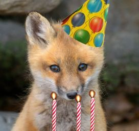 fox borthday