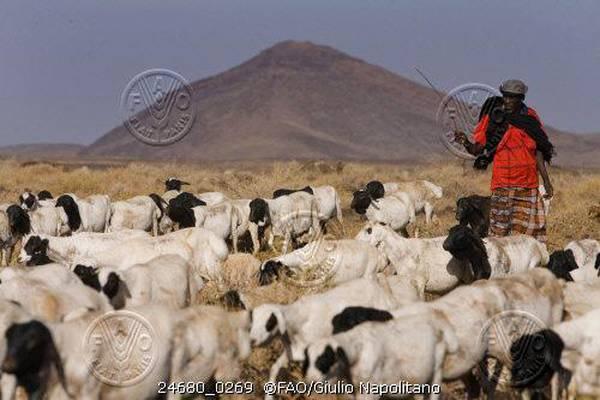 Da Fao e Ue una piattaforma on line per comunità pastori