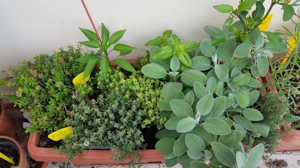 In Manovra 'bonus verde' per terrazzi e giardini