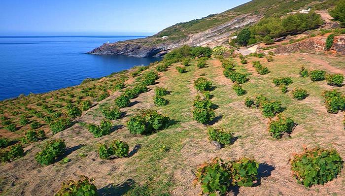 Pantelleria, un modello di aridocoltura salva-acqua
