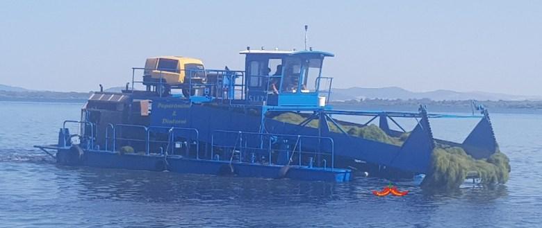 Eliminazione alghe in eccesso