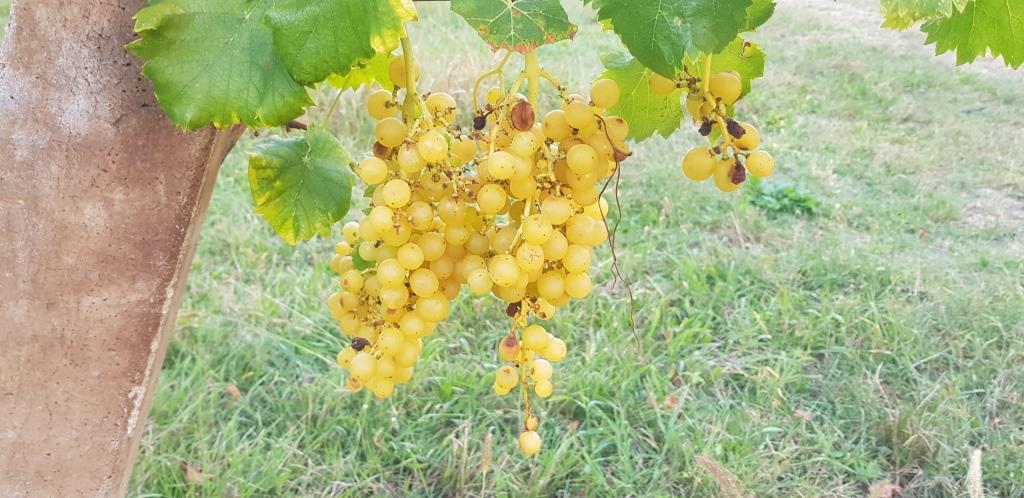 Tour fra i vini e i prodotti dei Colli Euganei seconda Parte