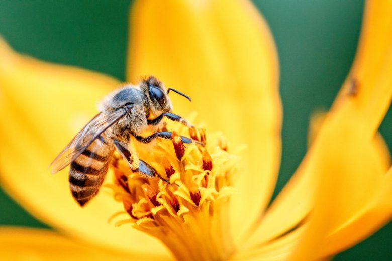 Giornata Mondiale delle api, U Cunigghiu 'a stimpirata