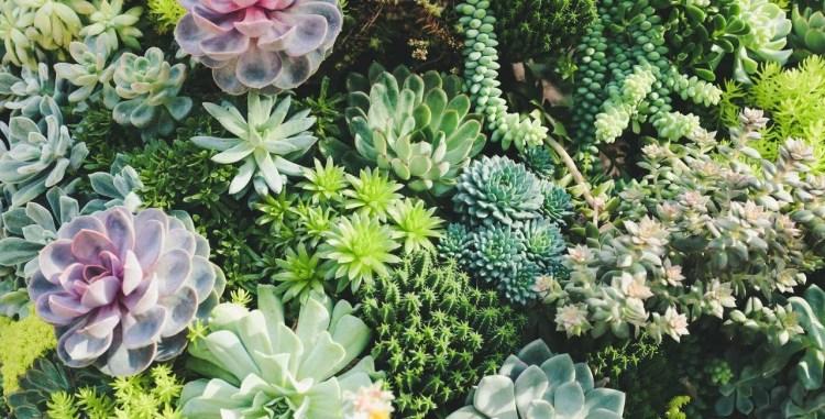 3 - plantas - suculentas