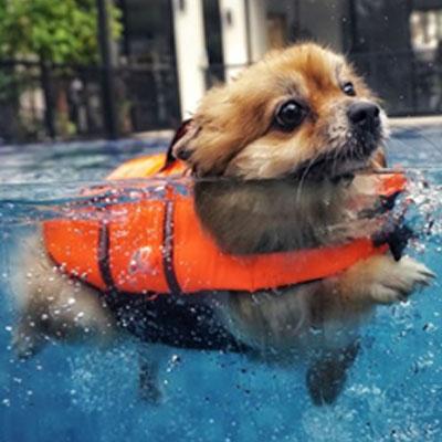 cães na piscina 5