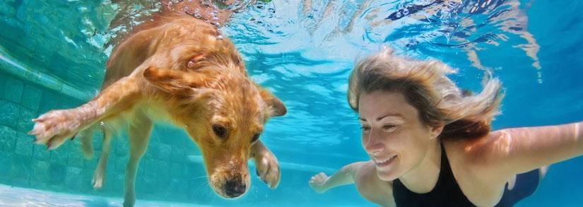 Cachorros na piscina: Saiba quais cuidados você precisa ter