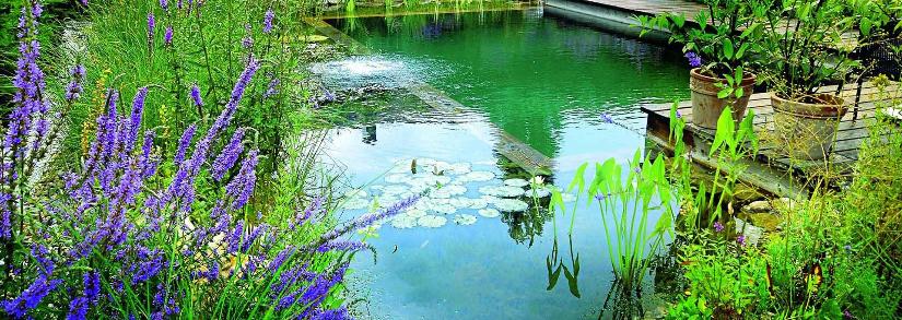 Quais as vantagens e desvantagens da piscina biológica?