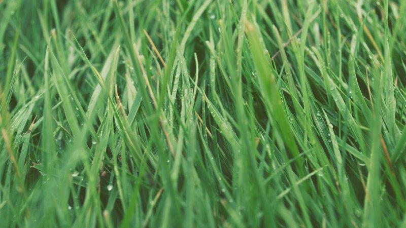 """DerWirtschaftsteil """"kompakt"""" ist eine Kolumne aus kuratierten Beiträgen der Wirtschaftsgazetten und Blogs von Maximilian Buddenbohm heute zum Thema Gras und Design."""