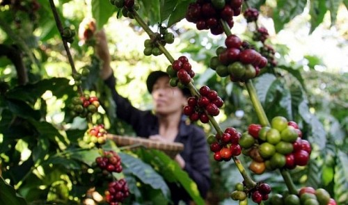 Vietnam exports of agricultural products suffers a big blow