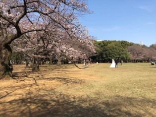 JAPAN_MASK_6729