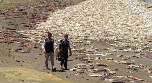 fukushima-fish-coean-eating