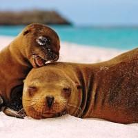 Sea lion and cub