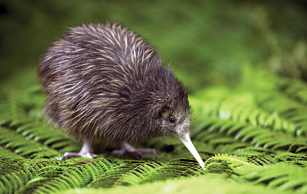 Image result for new zealand wildlife