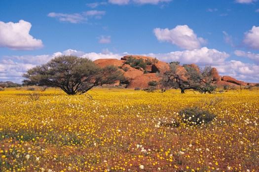 Western Australia's Wildflower Season is in Full Bloom ...