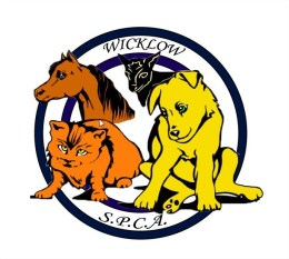 All about animals @ Wicklow Spca Sharpeshill Wicklow County Tourism - Mozilla Firefox
