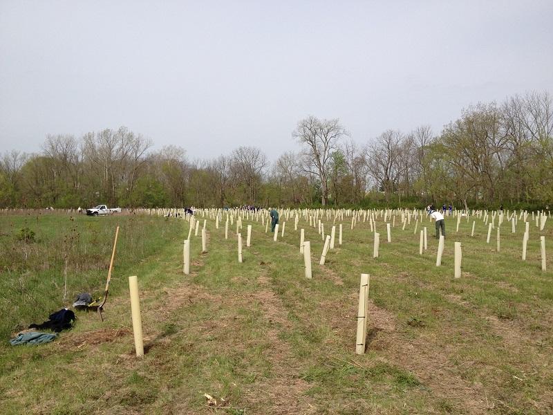 Reforestation_MWF_2013.04.23