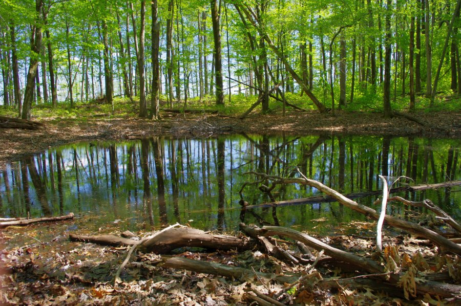 A vernal pond surrounded by a forest.