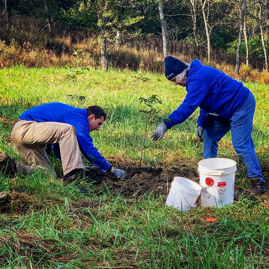 Great Parks employees plant trees on a newly acquired plot of land.