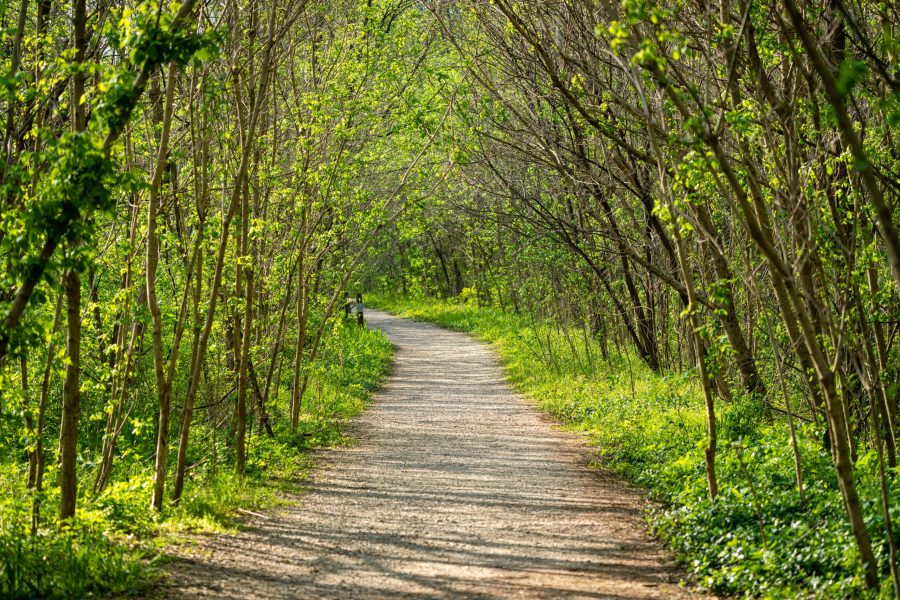 Young trees line the Kingfisher Trail on a sunny spring afternoon.