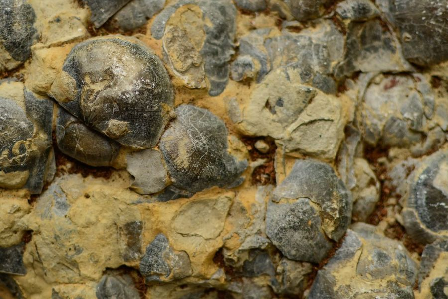 Fossils from the Ordovician era.