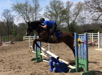 A woman is horseback riding where she is jumping over an obstacle.