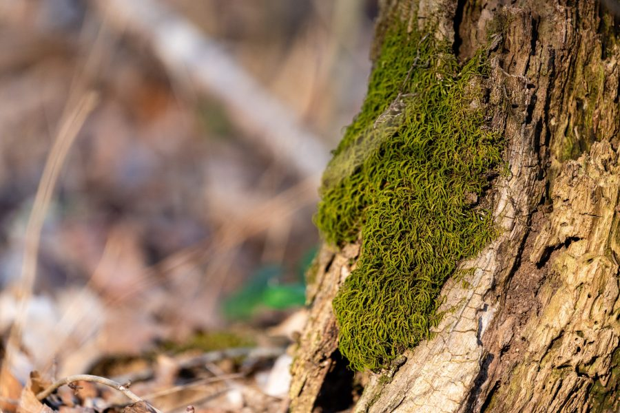 Green moss grows on the trunk of a tree. It is sunny.