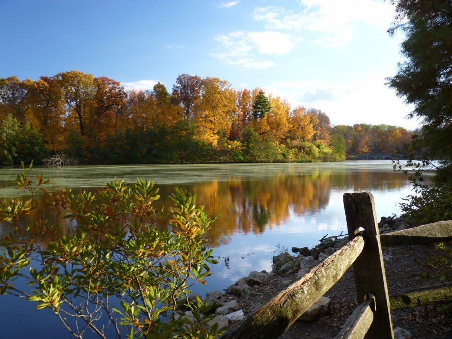 Colorful trees line Sharon Lake on a sunny November morning.