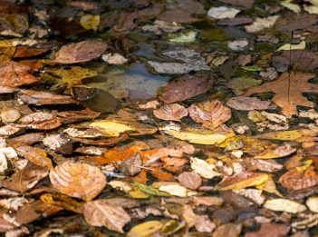 Red, brown, and yellow leaves float atop the creek on the Kingfisher Trail on a sunny fall day at Winton Woods.