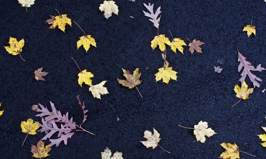Yellow, brown and red leaves are scattered along a blacktop.