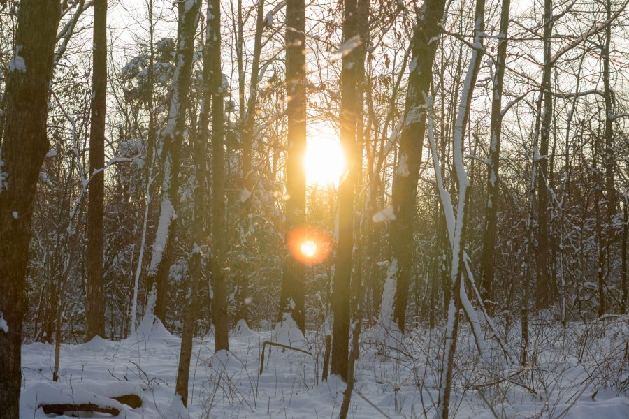 The sun shines through snow-covered trees in Winton Woods.