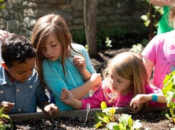Children surround a garden bed at Highfield Discovery Garden.