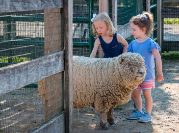 Two young girls pet a sheep at Parky's Farm.