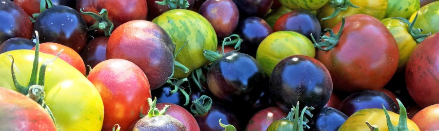 Tomato varieties sit in a large pile. They range from green to red to deep purple.
