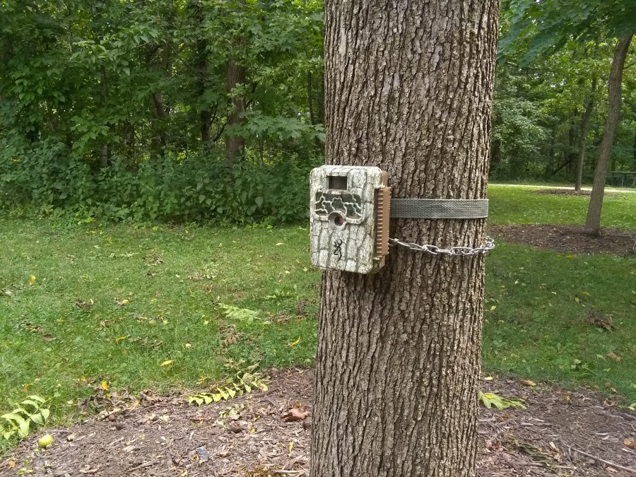 A trail cam is attached to a tree.
