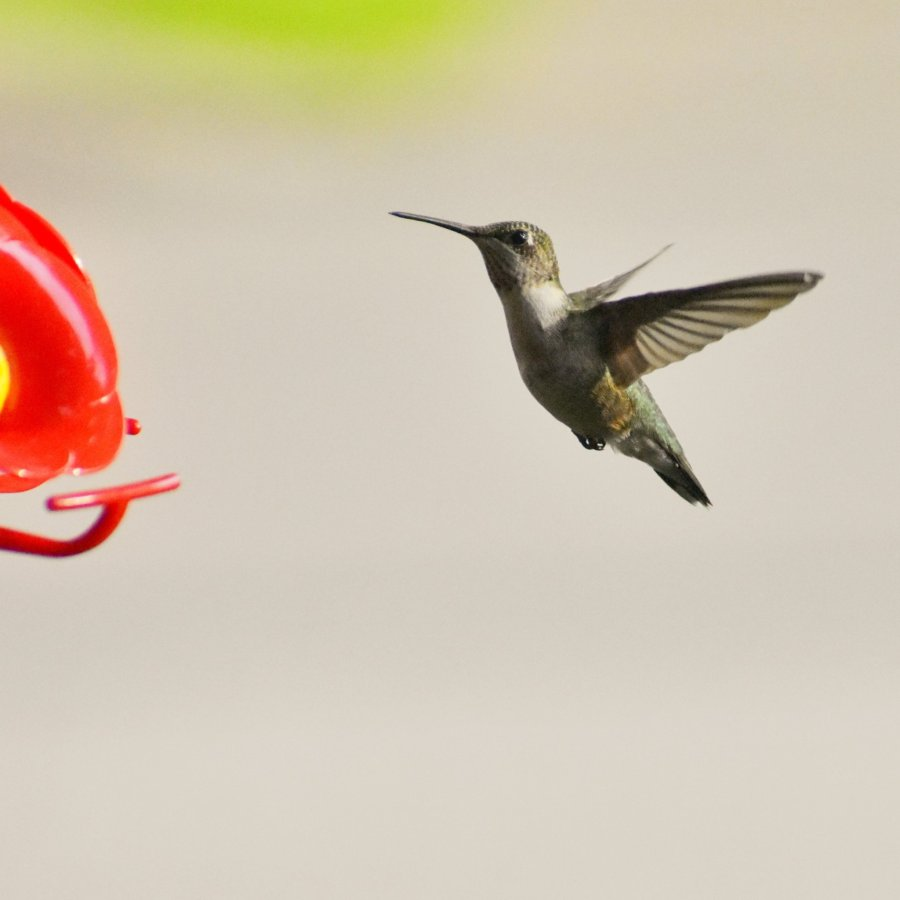 A hummingbird is in mid-flight, approaching a bird feeder. Its wings are outstretched.