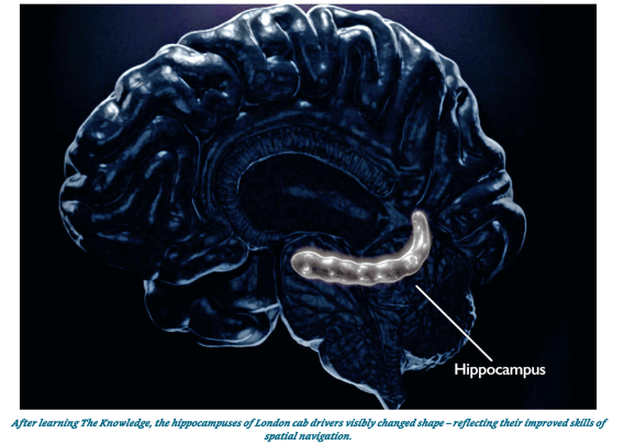 Brain Hippocampus