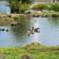Save water to save wildlife: Your water usage and the impact on wildlife