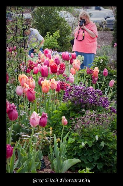 Flower Shoot Botanical Garden Of The Ozarks Greg Disch Photography