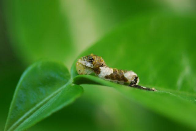 caterpillar-orange-dog