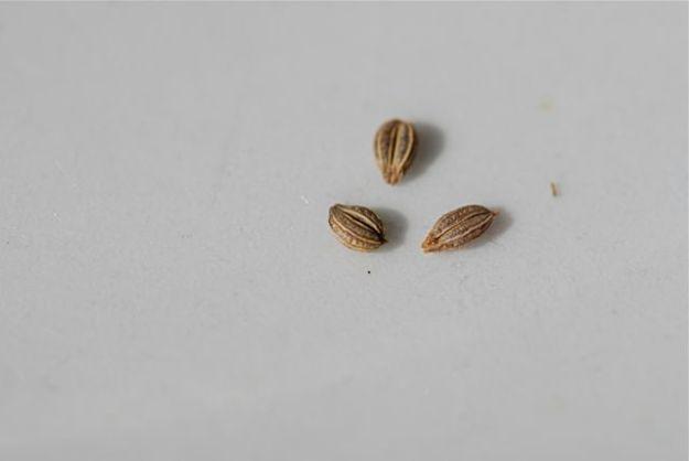 mystery-seeds-150