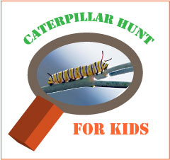 caterpillar-hunt-for-kids